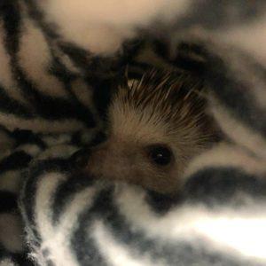 PokeyNibbles is all cozy in her blankey. <3
